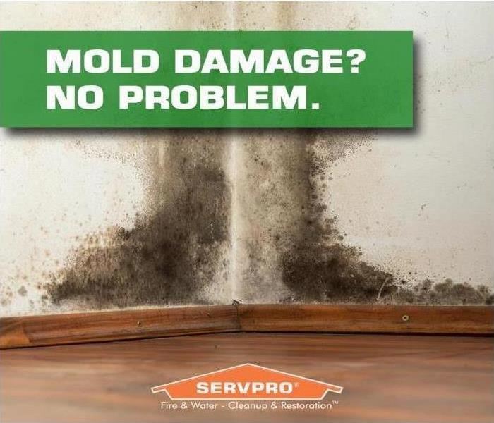Mold Remediation What You Should Know About Mold