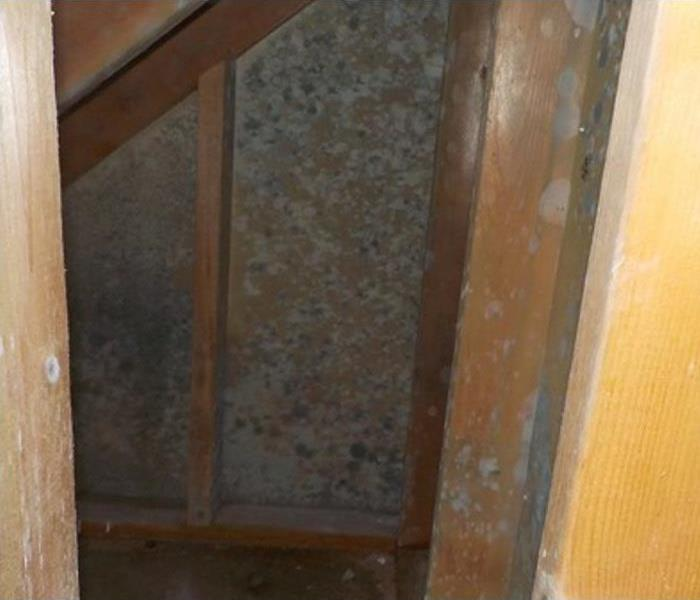 Mold Remediation Water Mitigation Leads to Mold Remediation